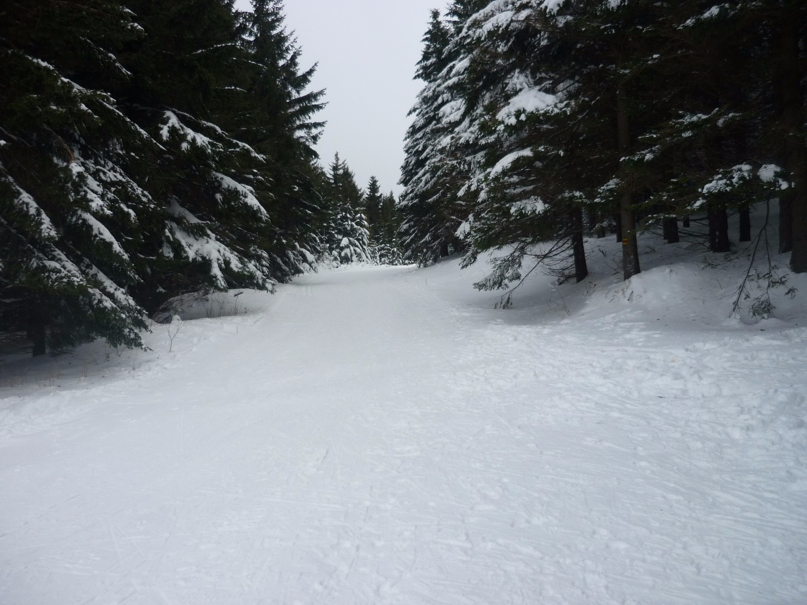 Ski areál Šindelná - Kouty nad Desnou