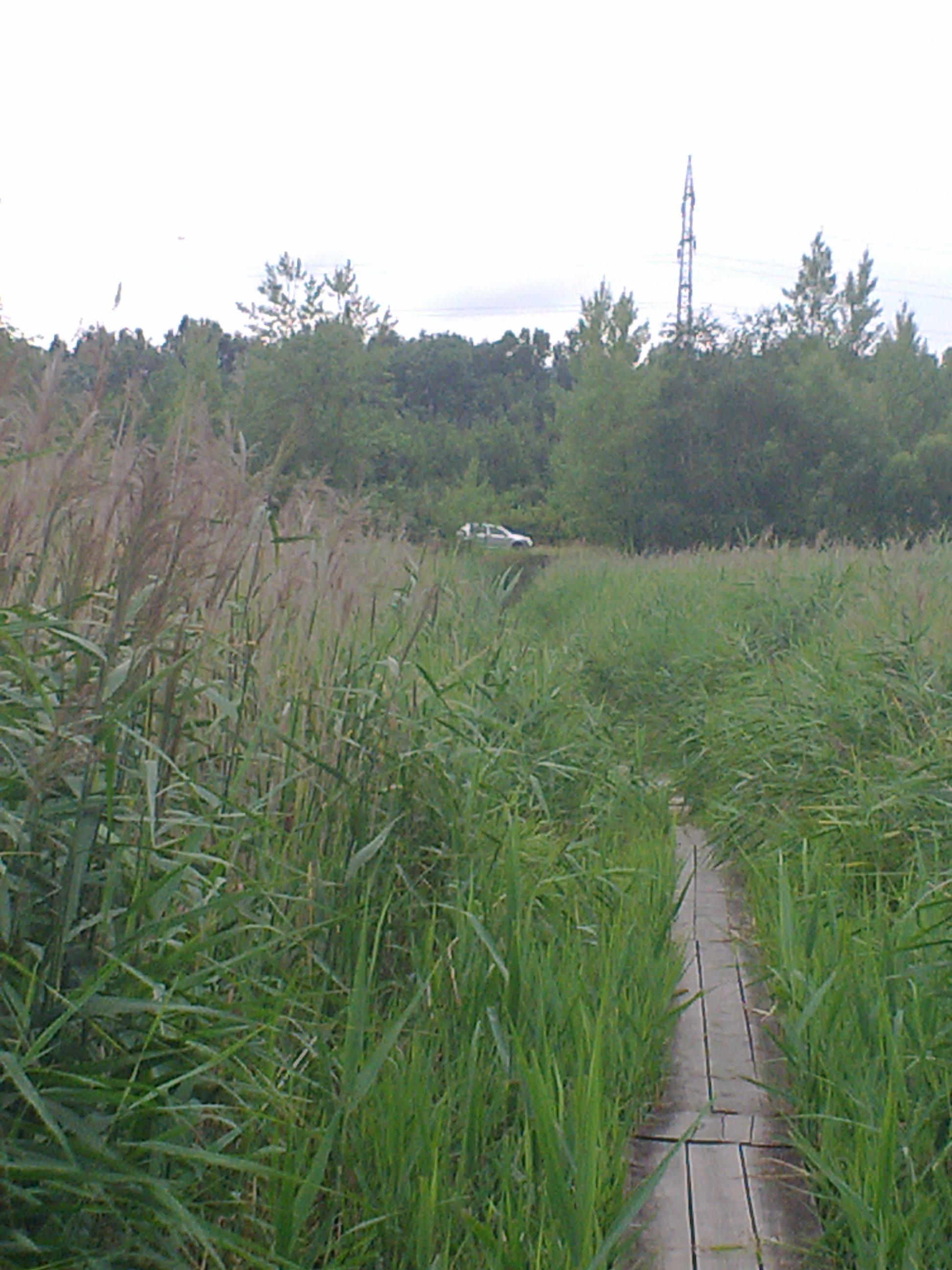 Heřmanický Teich