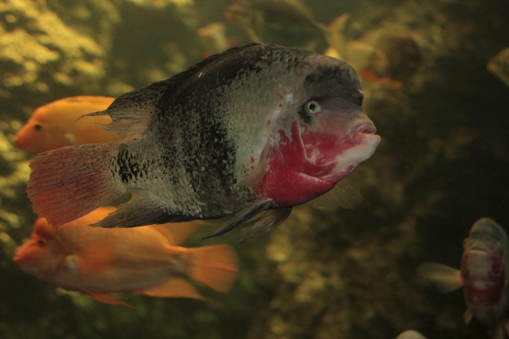 Riesen Aquarium